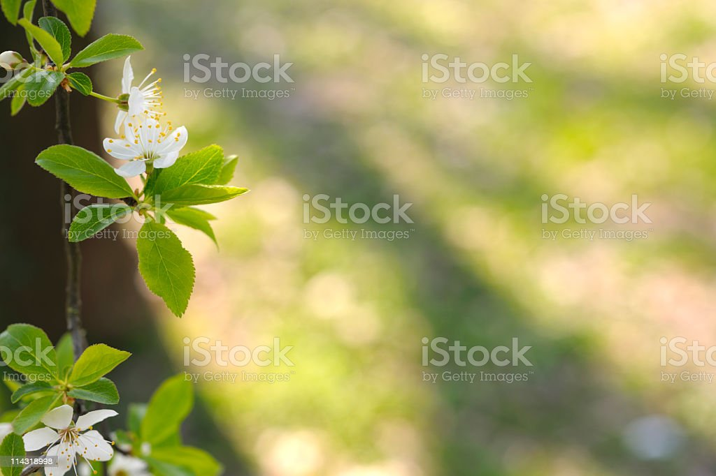 Spring Blossom Border with Background royalty-free stock photo