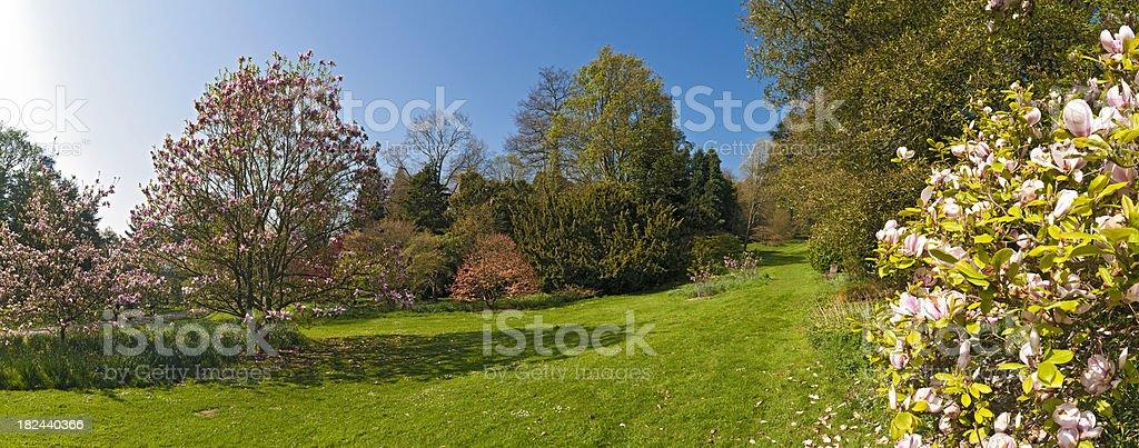 Spring blossom idyllic gardens lush green foliage blue sky panorama royalty-free stock photo