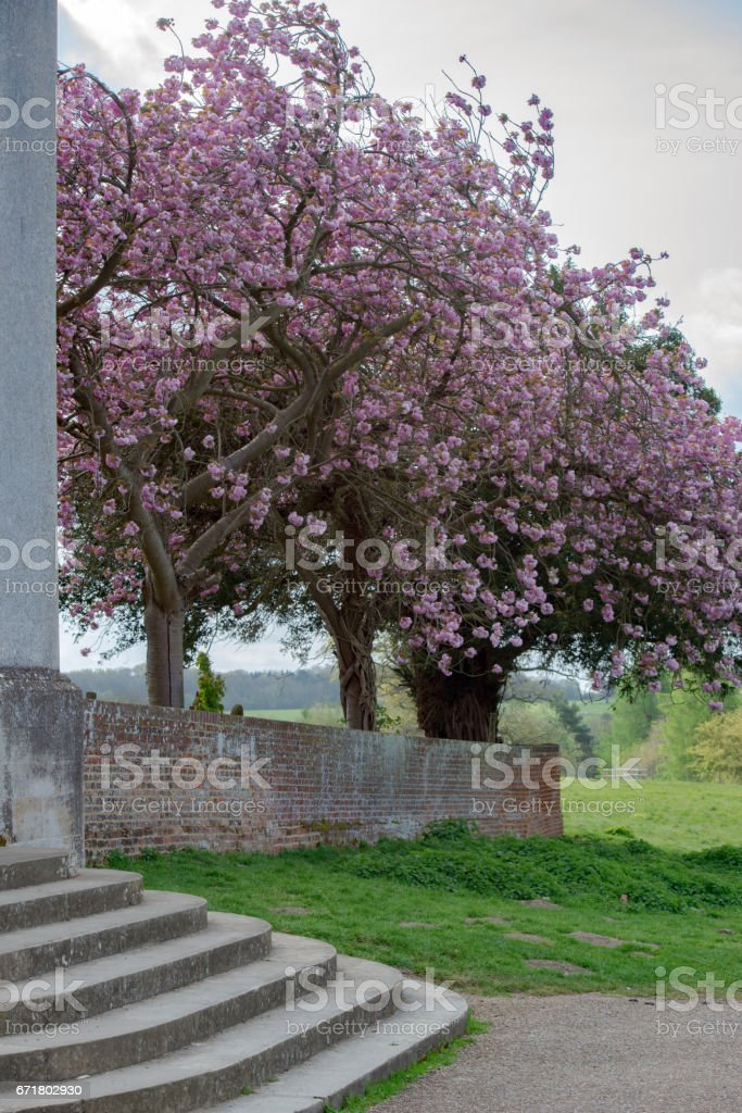 Spring blossom in Suffolk, UK stock photo