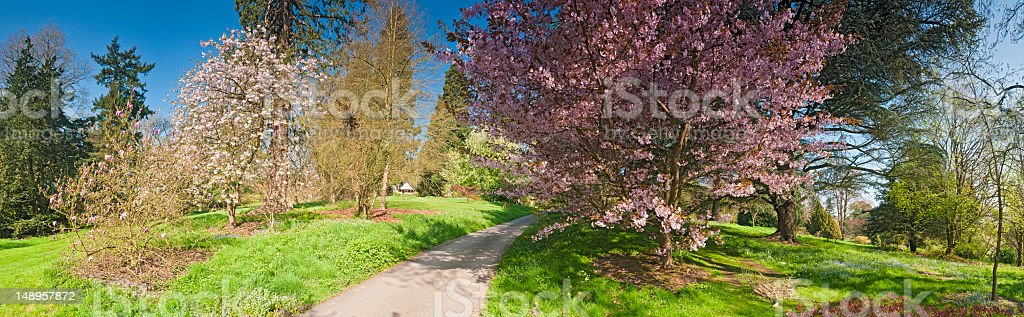 Spring blossom lush foliage panorama royalty-free stock photo