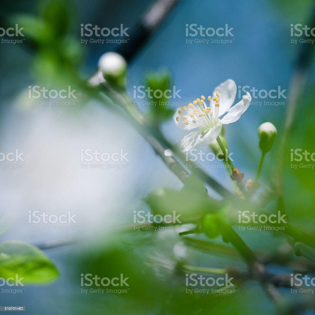 Spring blossom macro stock photo