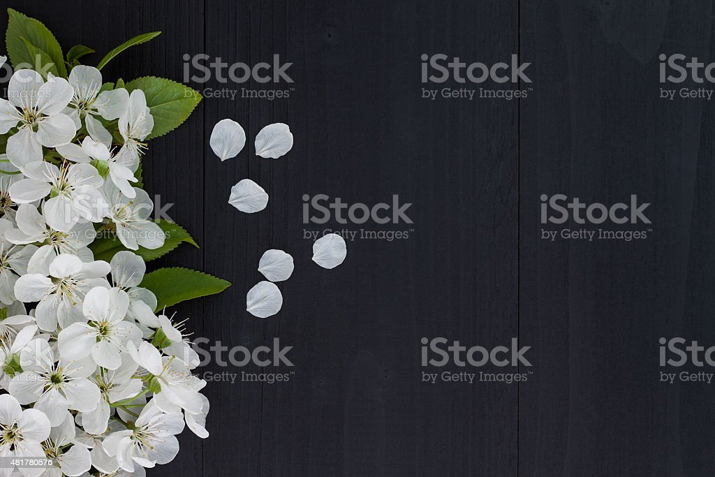 Spring blossom over wooden background stock photo