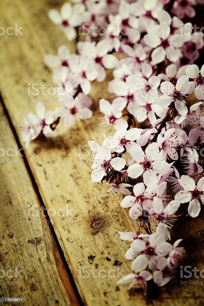 Spring Blossom royalty-free stock photo