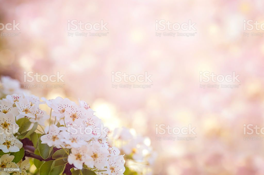 Spring Blossom stock photo