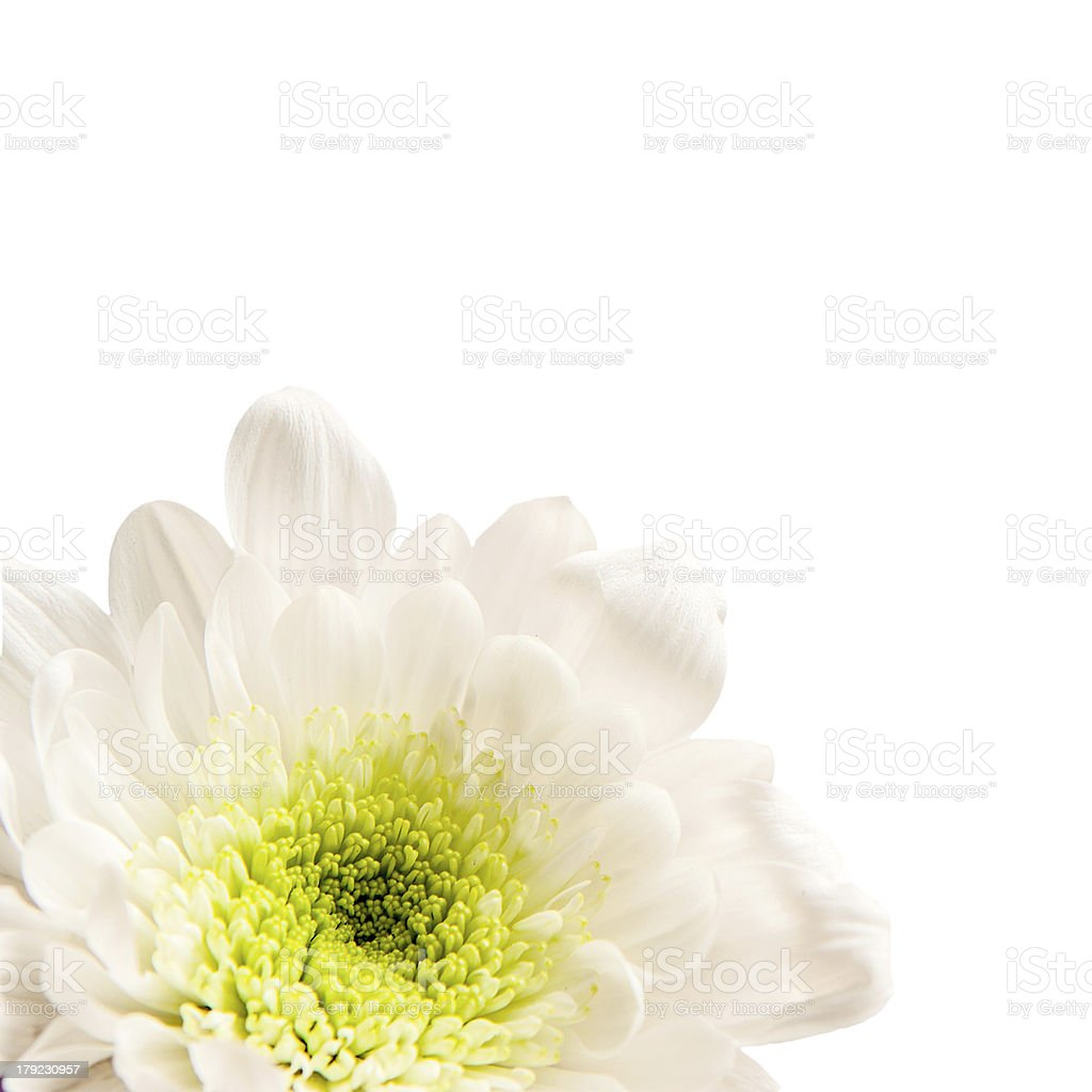 Spring blossom. White flowers. royalty-free stock photo