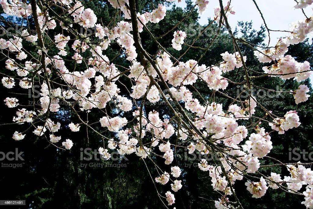 Fioritura fiori primaverili foto stock royalty-free