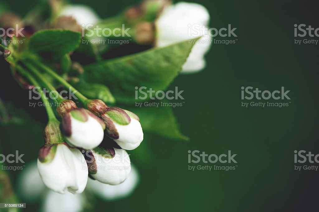 Spring blossoms tree stock photo