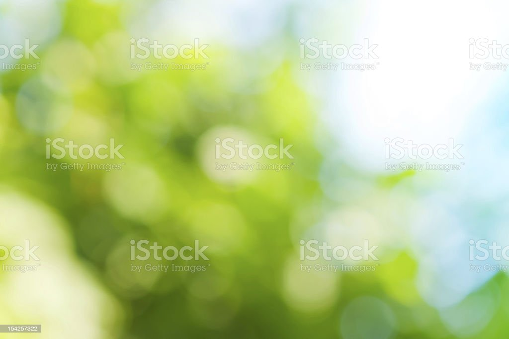 spring blurred background in green colors stock photo
