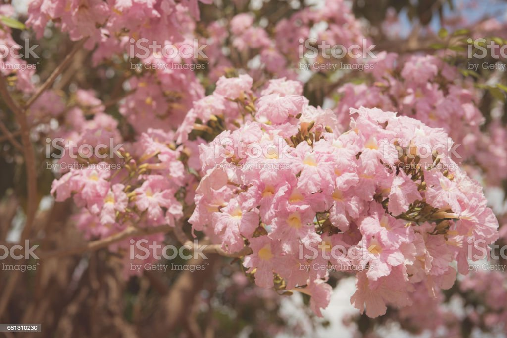 Spring border or background art with pink blossom. Beautiful nature scene with blooming tree and sun flare. Sunny day. Spring flowers. Beautiful Orchard. Abstract blurred background. Springtime stock photo