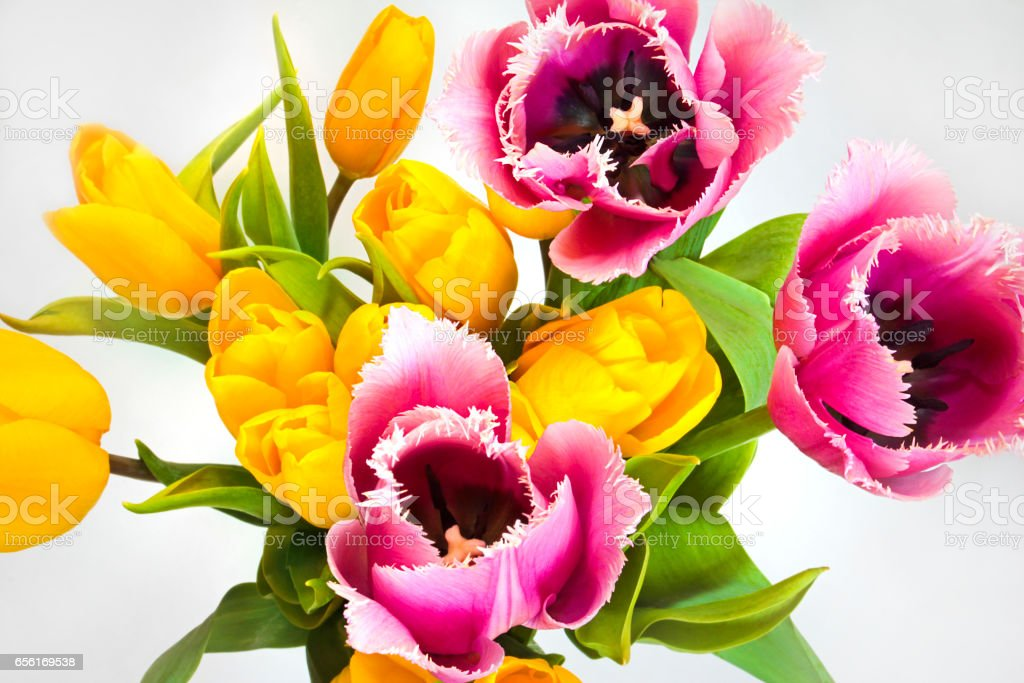 Spring bouquet. stock photo