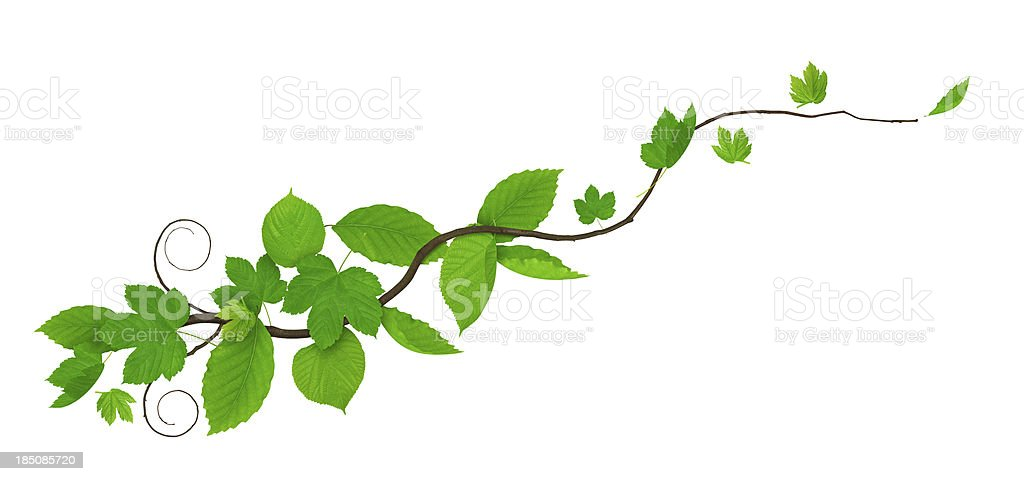 Spring Branch royalty-free stock photo