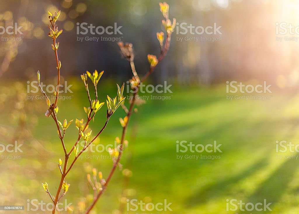 Spring branch stock photo
