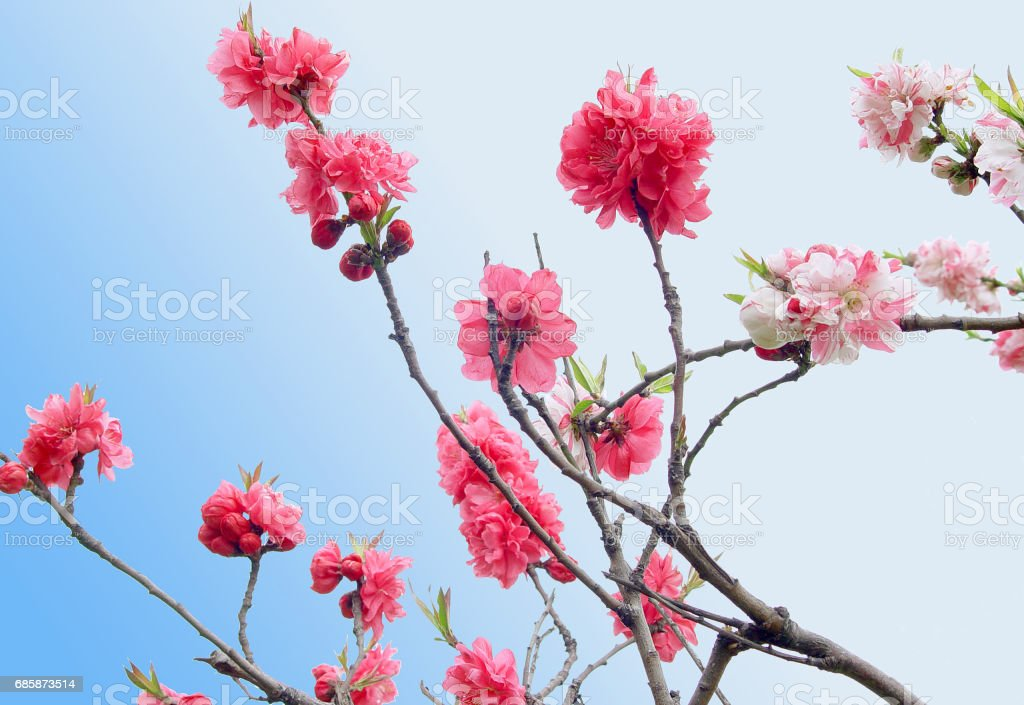 spring branches stock photo