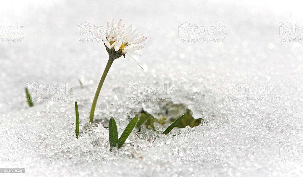 Spring breaks through ice stock photo