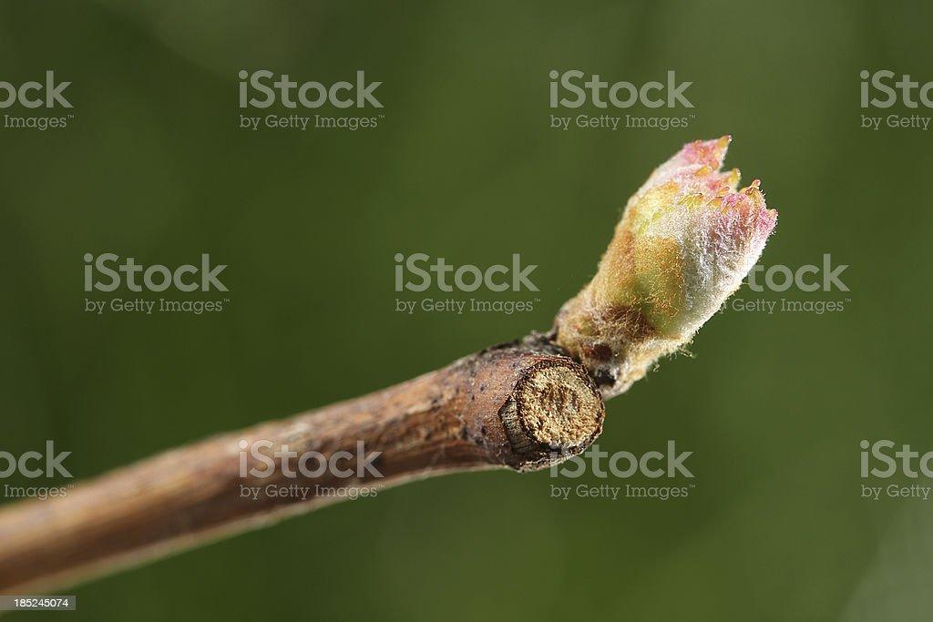 Spring bud stock photo