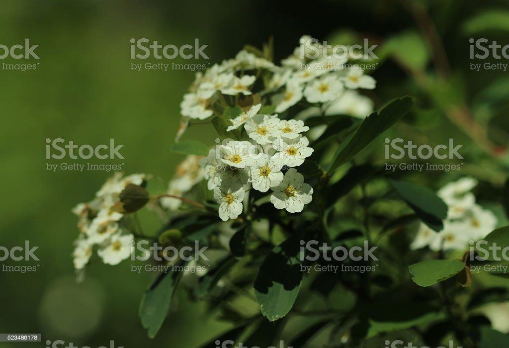 Spring buds - Brides wreath stock photo