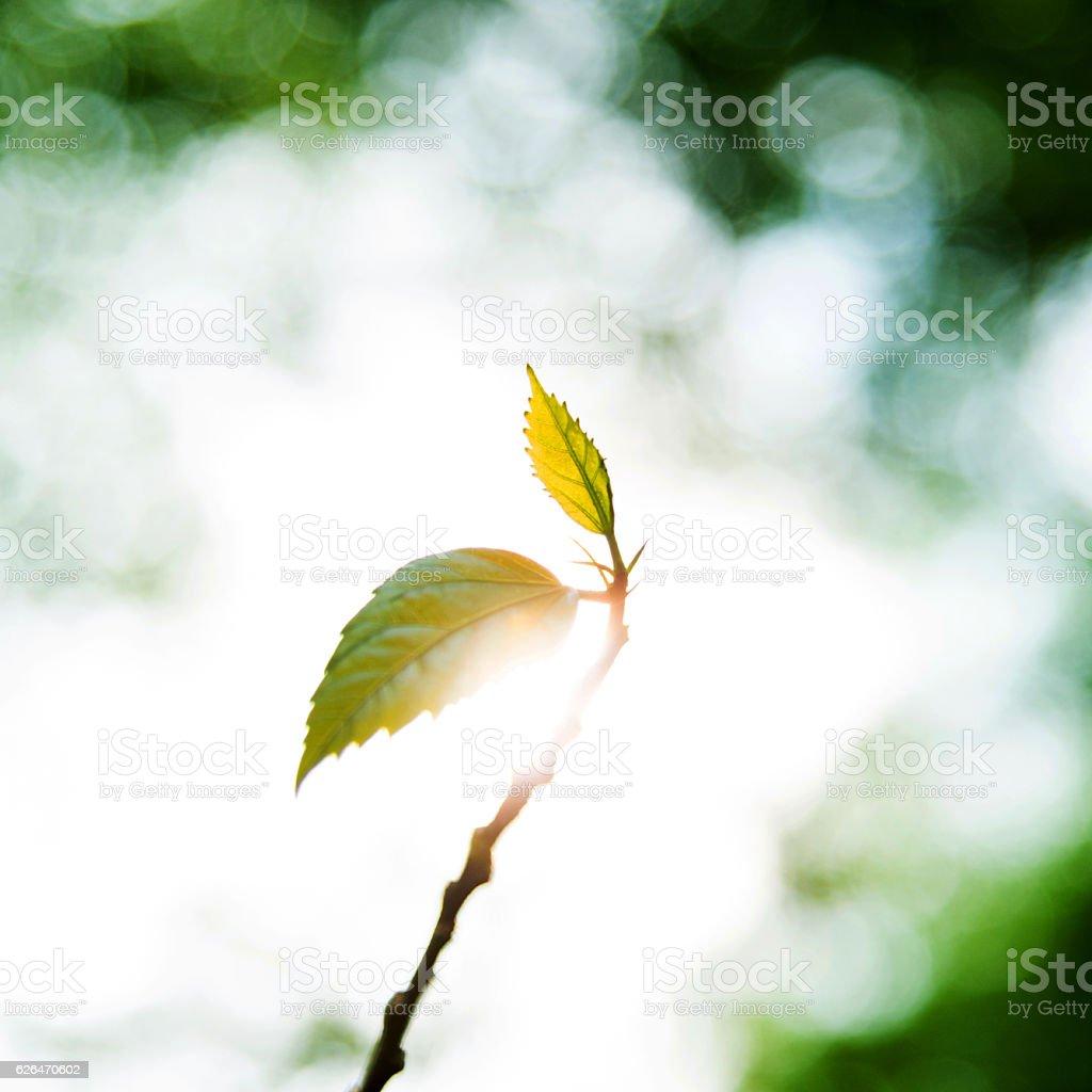 Spring buds in springtime stock photo