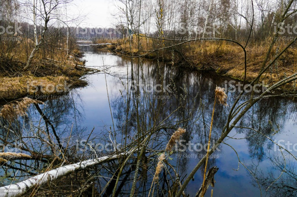 Spring by the lake in the forest in Russia stock photo