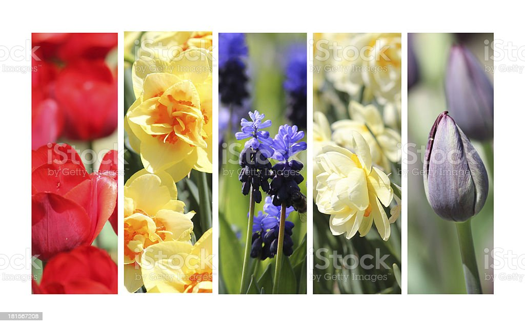 Spring collage royalty-free stock photo