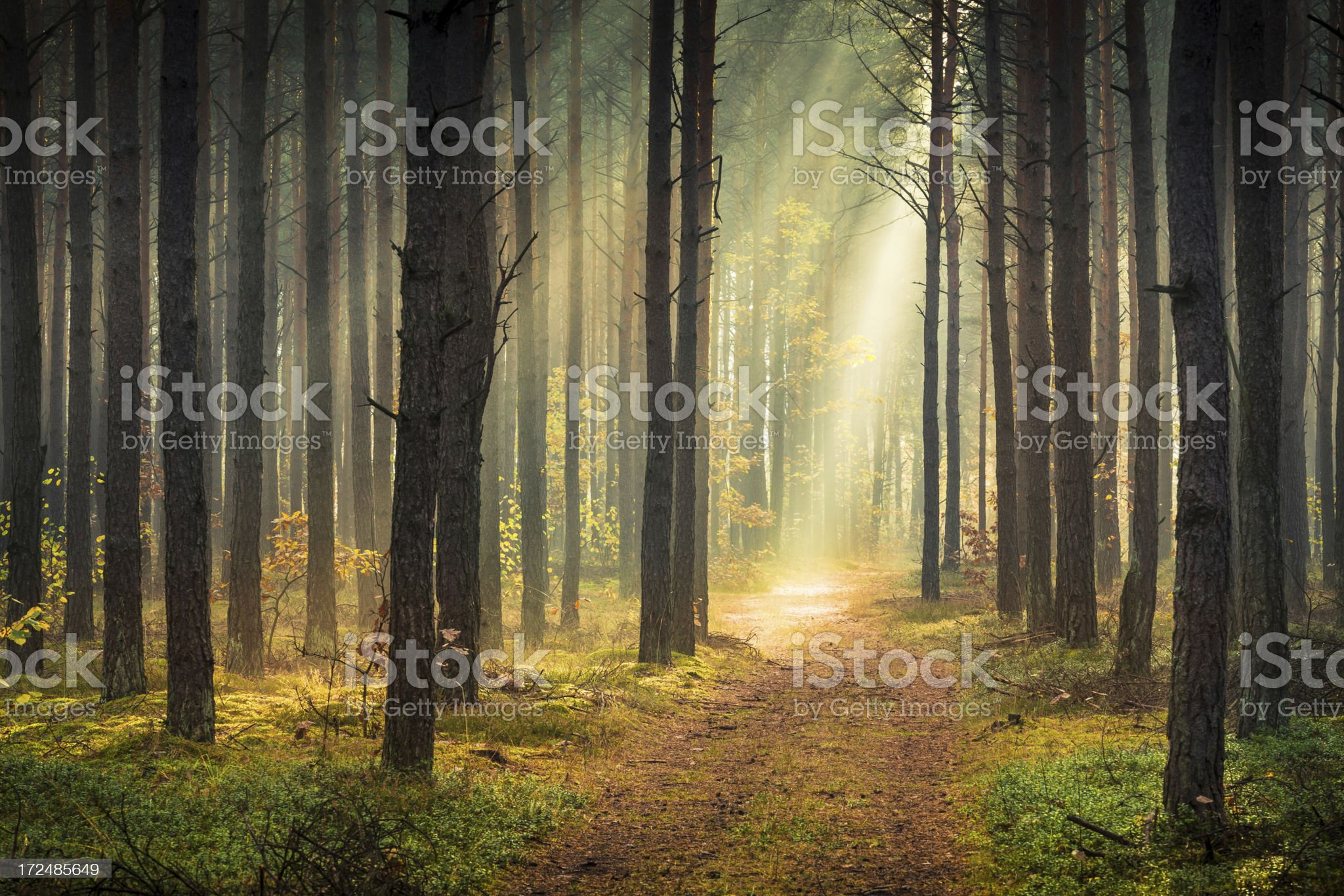 Spring Colorful Foggy Forest - Sun Beams royalty-free stock photo