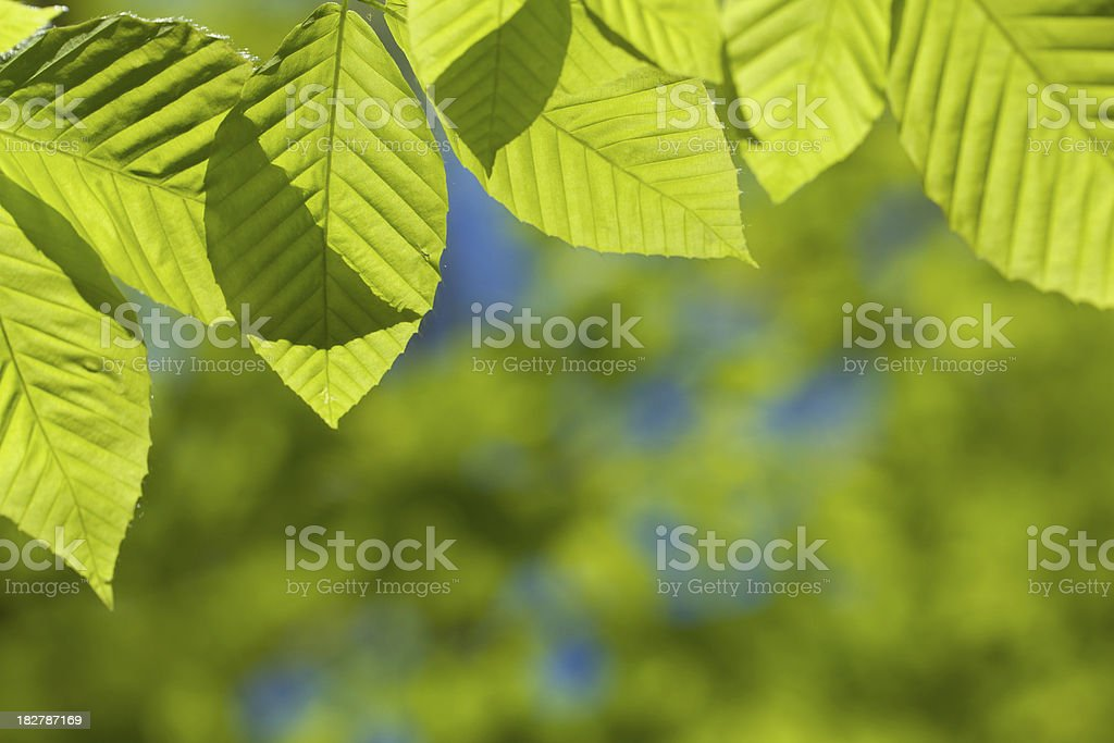 Spring Colors royalty-free stock photo