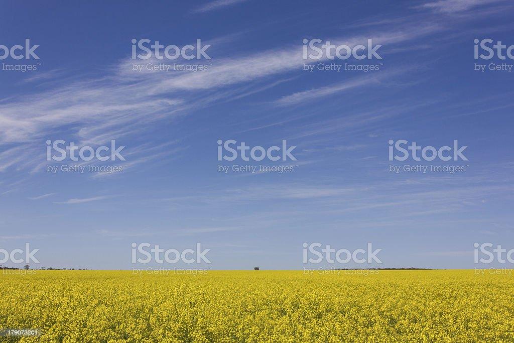 Spring Colour royalty-free stock photo