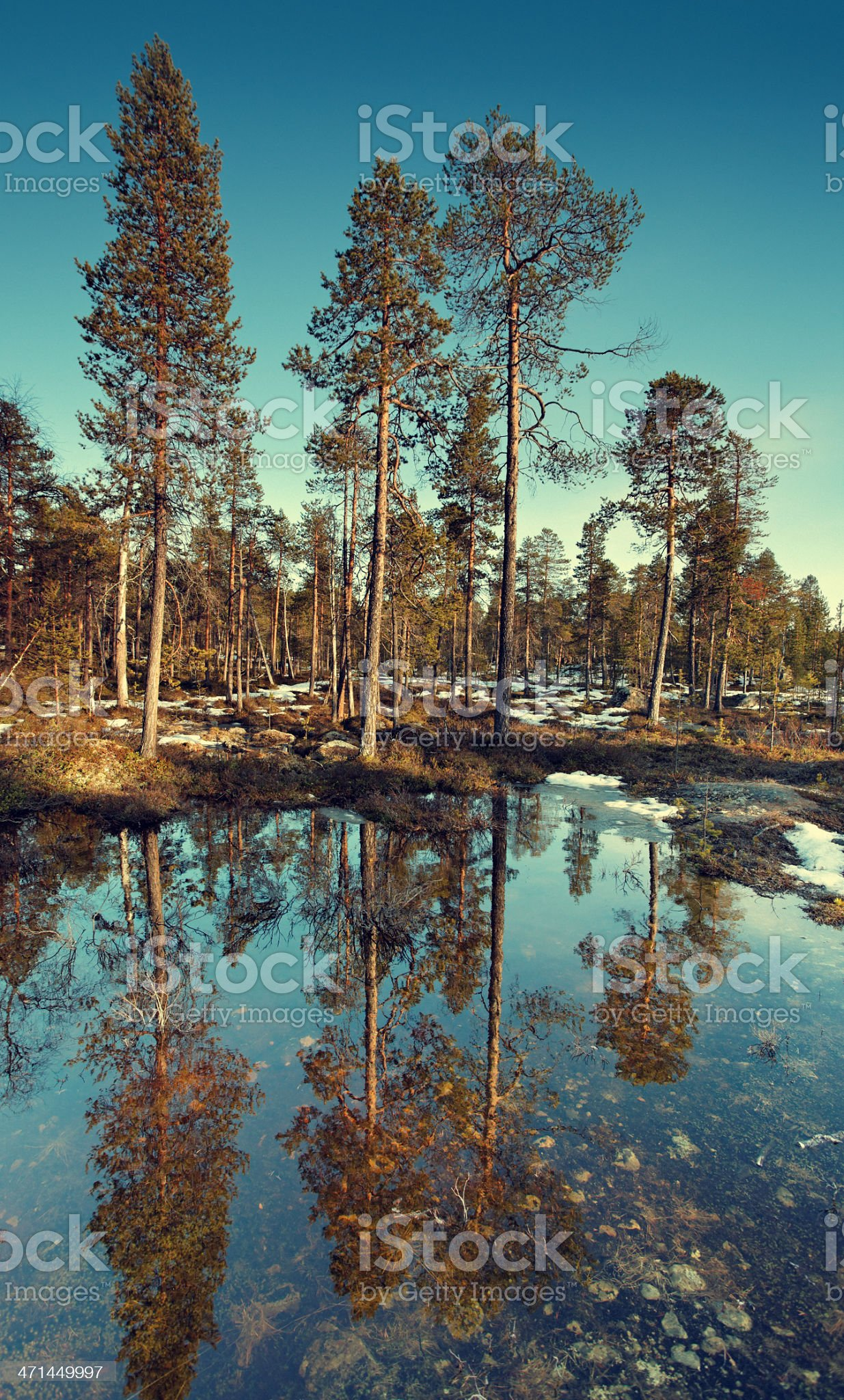 spring coming in Finland royalty-free stock photo
