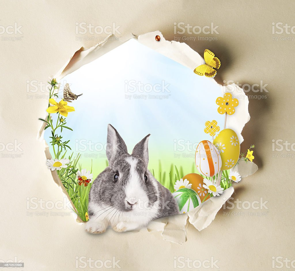 Spring concept with gappy paper stock photo