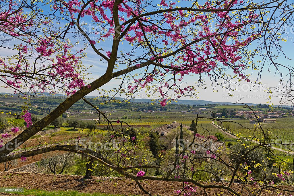 Spring Countryside in Italy royalty-free stock photo