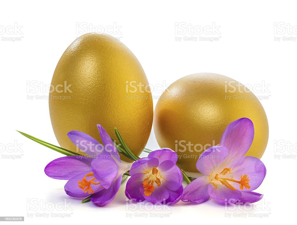 spring crocus with Easter eggs royalty-free stock photo