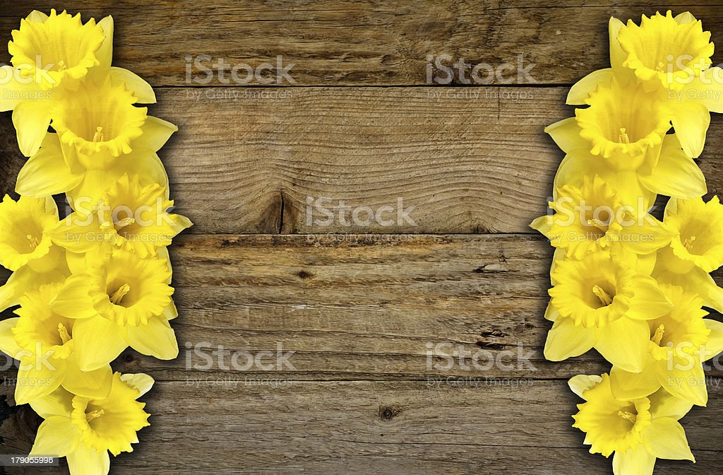 Spring daffodils border or frame background stock photo