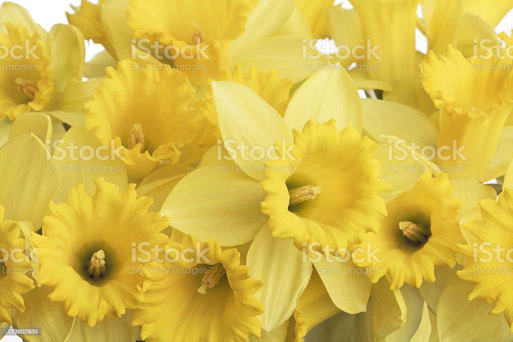 Spring Daffodils Bouquet of Yellow Flowers, Close-up stock photo