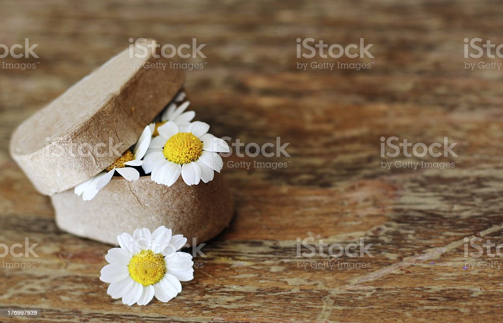 Spring daisies royalty-free stock photo