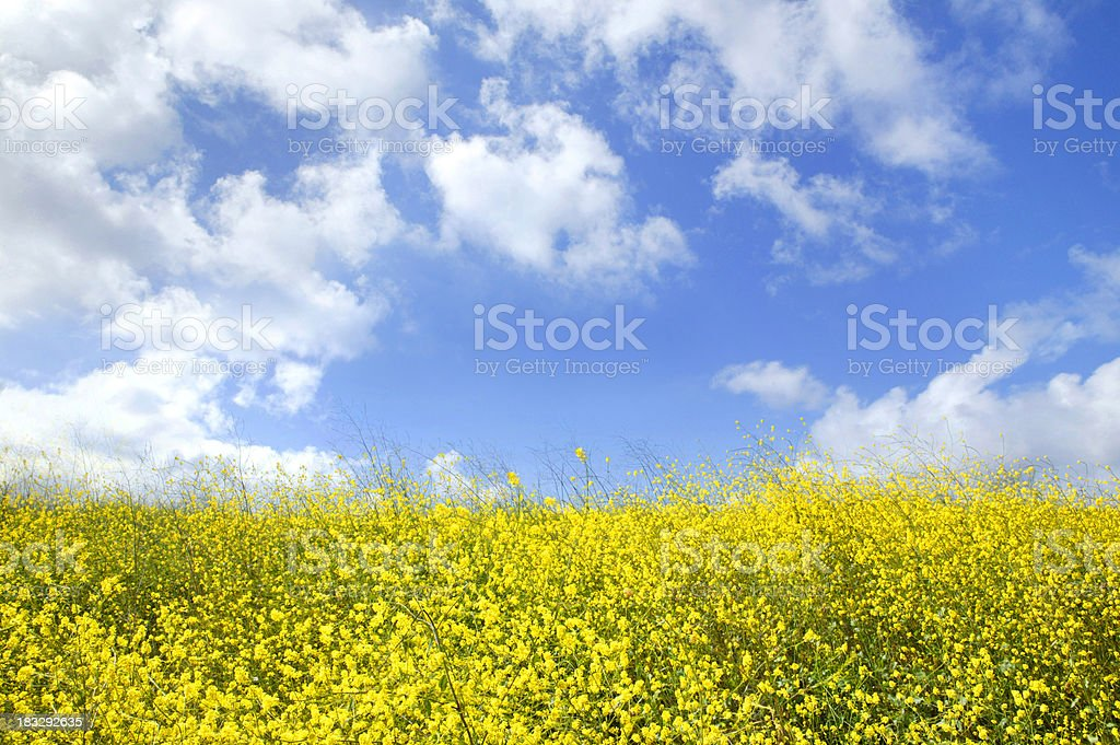 Spring Day 2 royalty-free stock photo