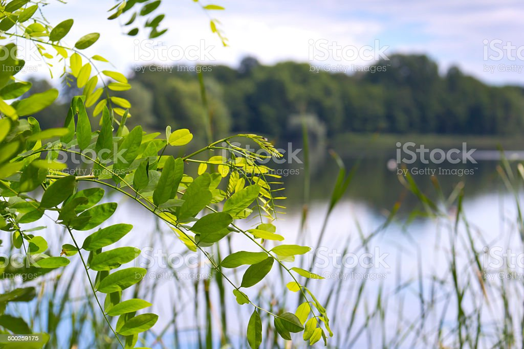 Spring day at the beautiful lake royalty-free stock photo