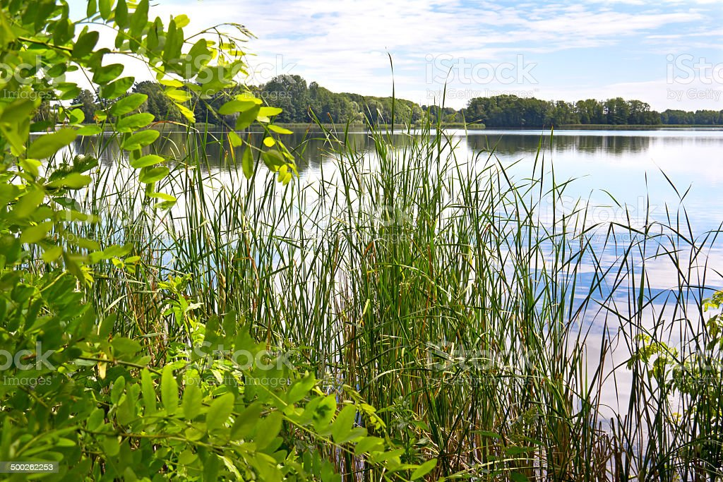 Spring day at the beautiful lake stock photo