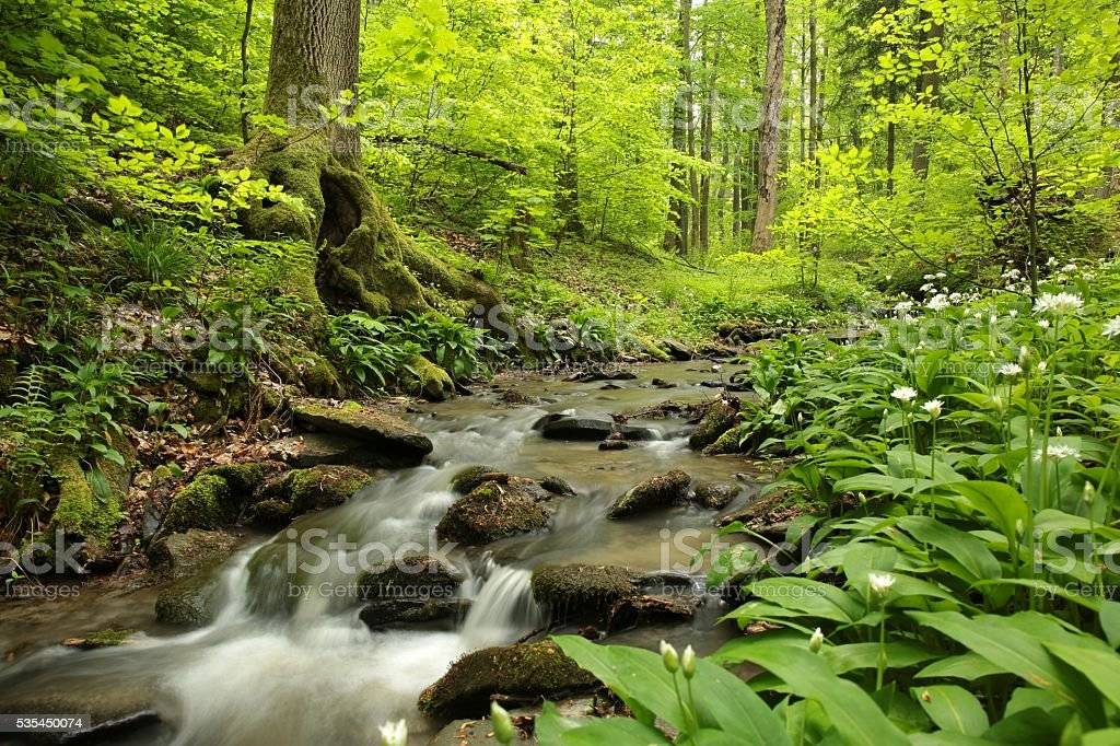 Spring deciduous forest stock photo