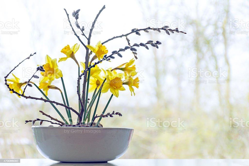 spring decoration, daffodils and pussy willow in a ceramic bowl stock photo