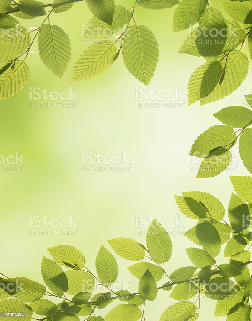 Spring Decoration - Natural Green Leaves royalty-free stock photo