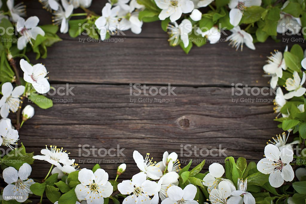 Spring Decoration royalty-free stock photo
