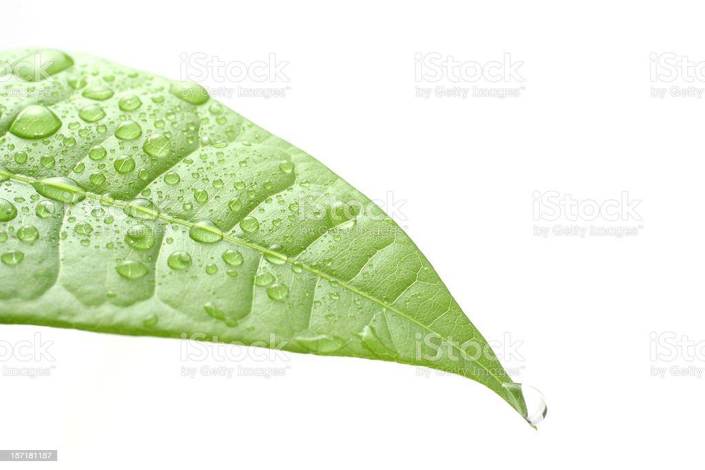 Spring Dew stock photo