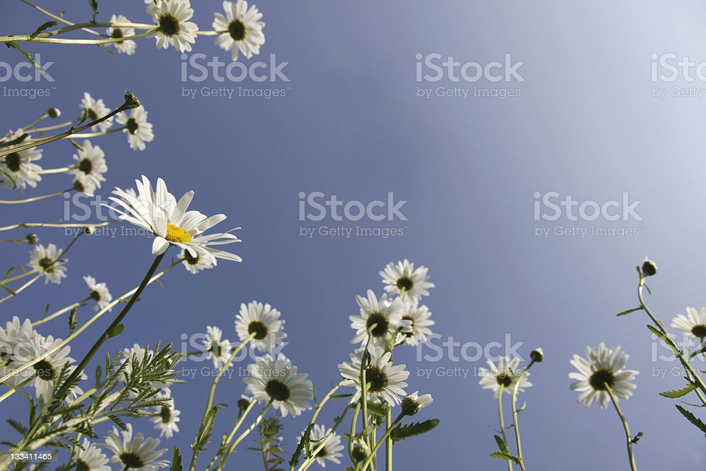 Spring Dream royalty-free stock photo