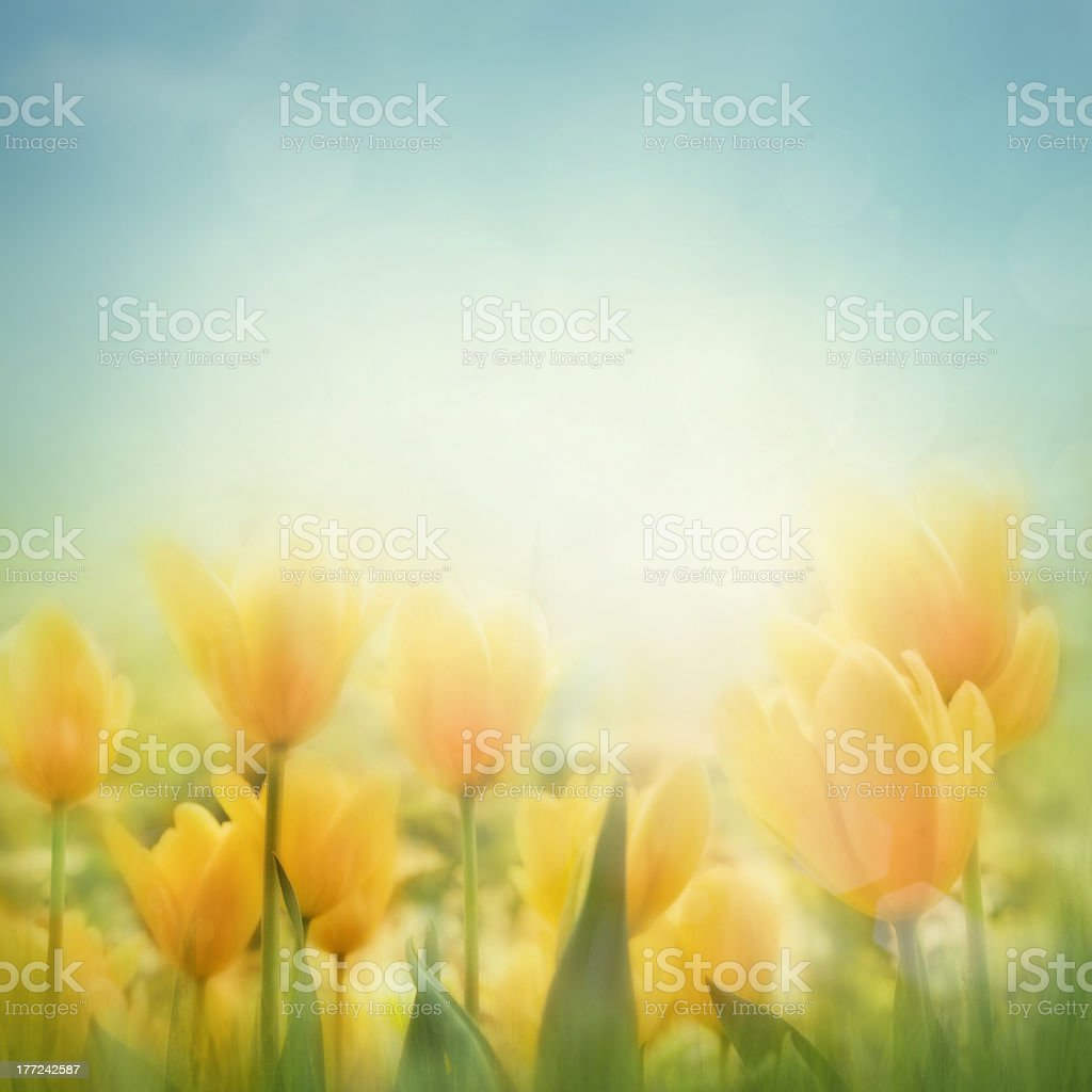 Spring Easter background royalty-free stock photo