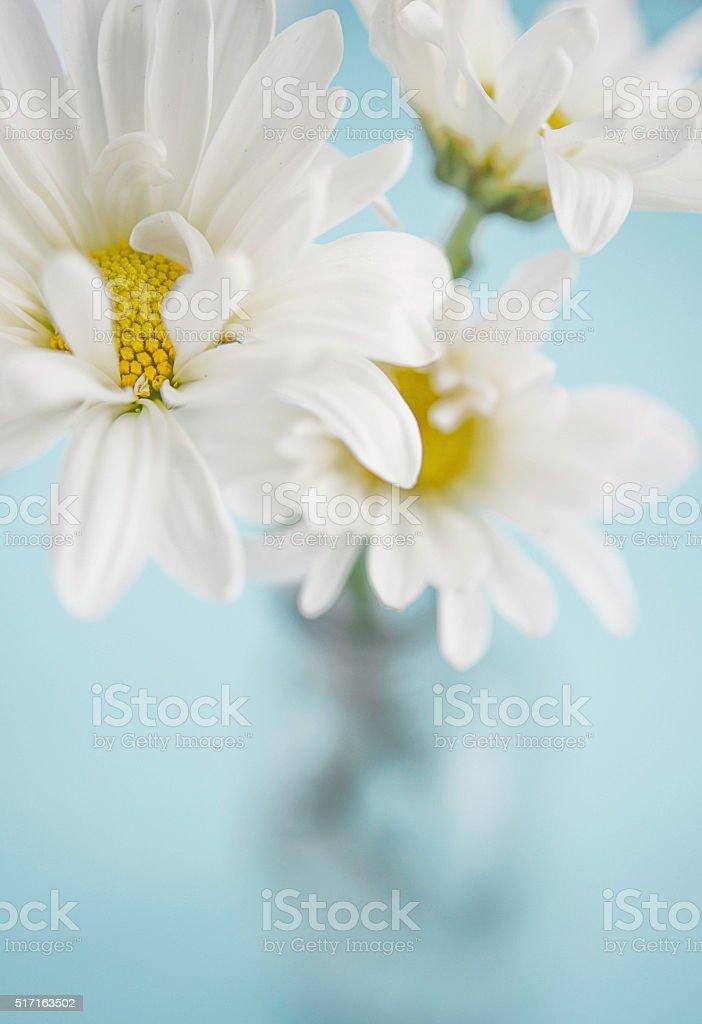 Spring Easter bouquet with fresh white dahlias stock photo