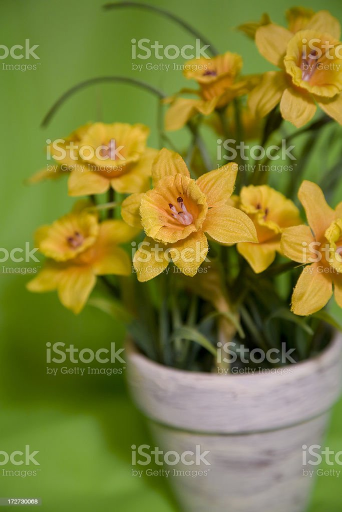 Spring Easter Flowers - daffodils royalty-free stock photo