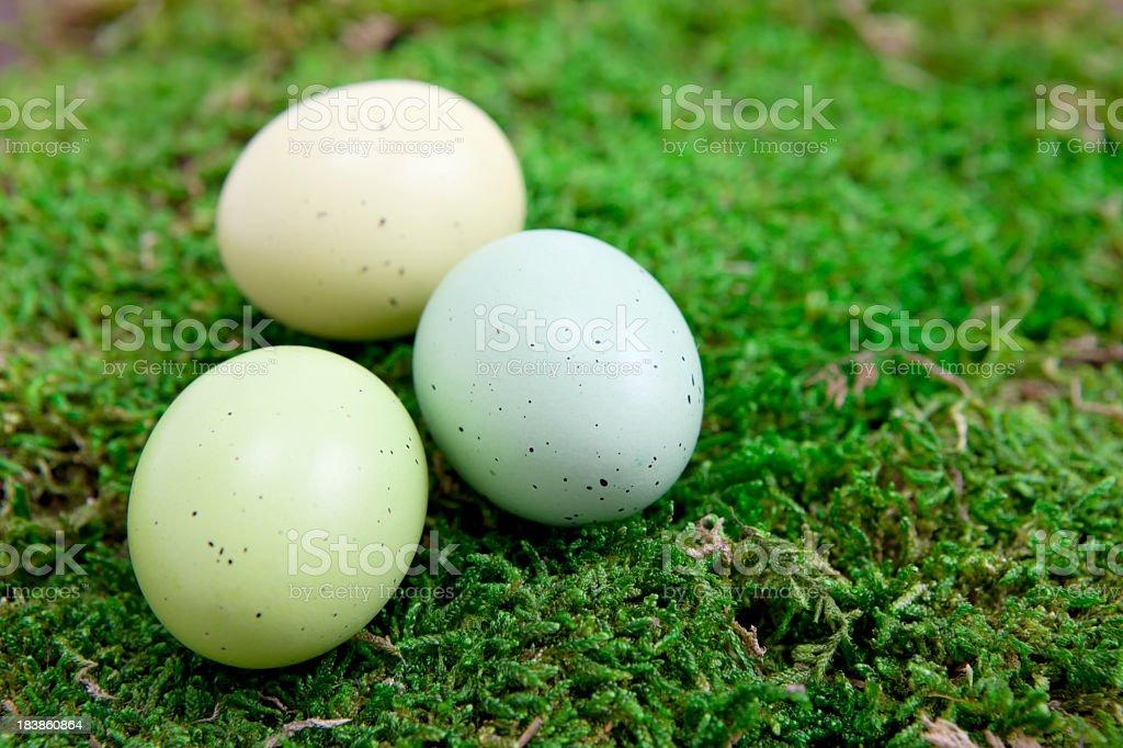 Frühling-Eier – Foto
