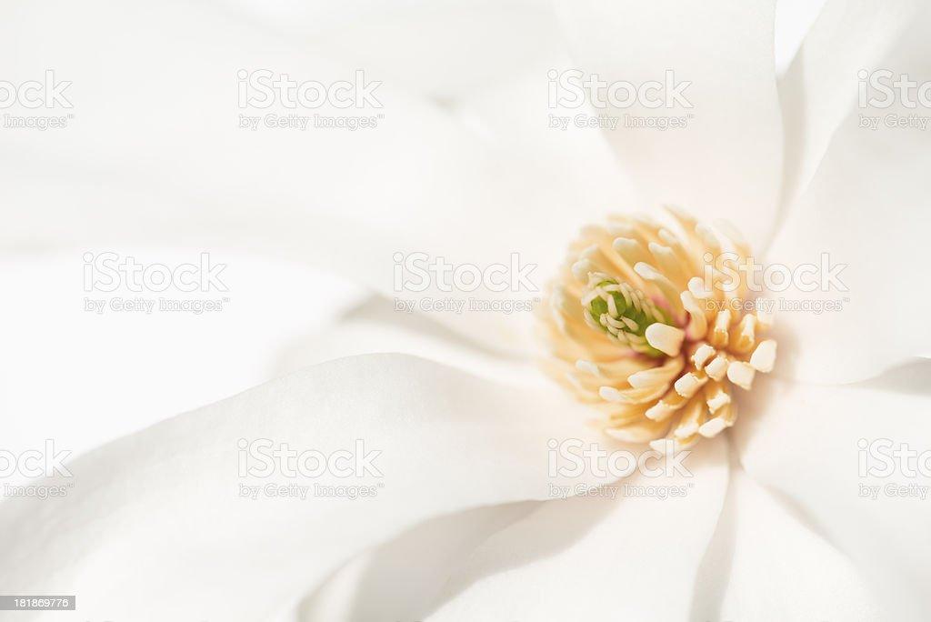 Spring Elegance royalty-free stock photo