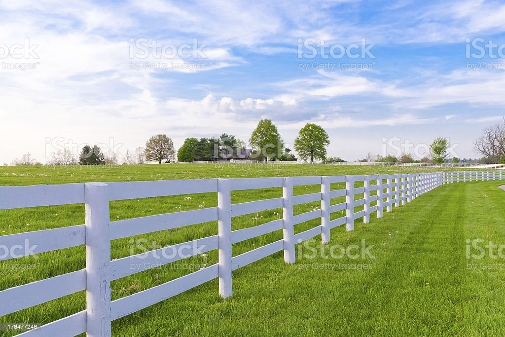 Spring evening at country. stock photo