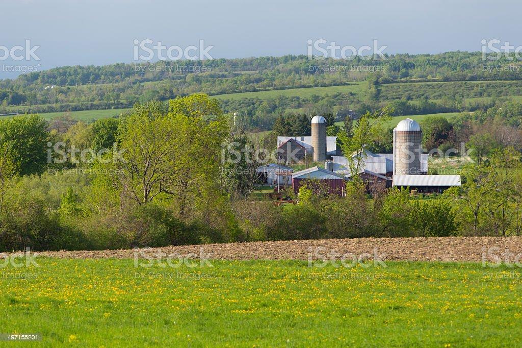 Spring Farm Landscape royalty-free stock photo