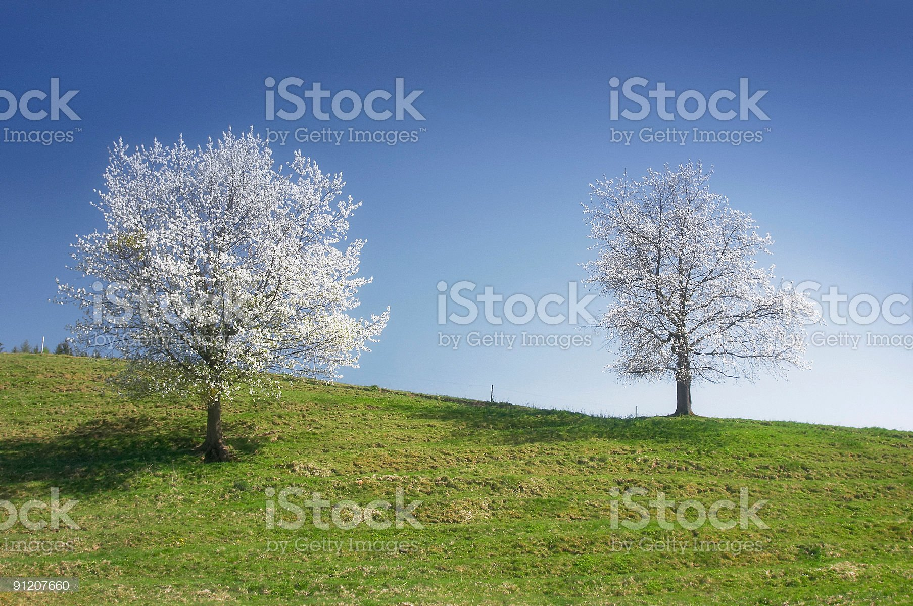 Spring fever royalty-free stock photo